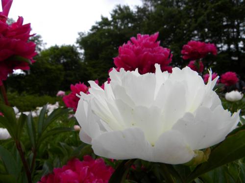 090620-016-散策-花畑-.JPG